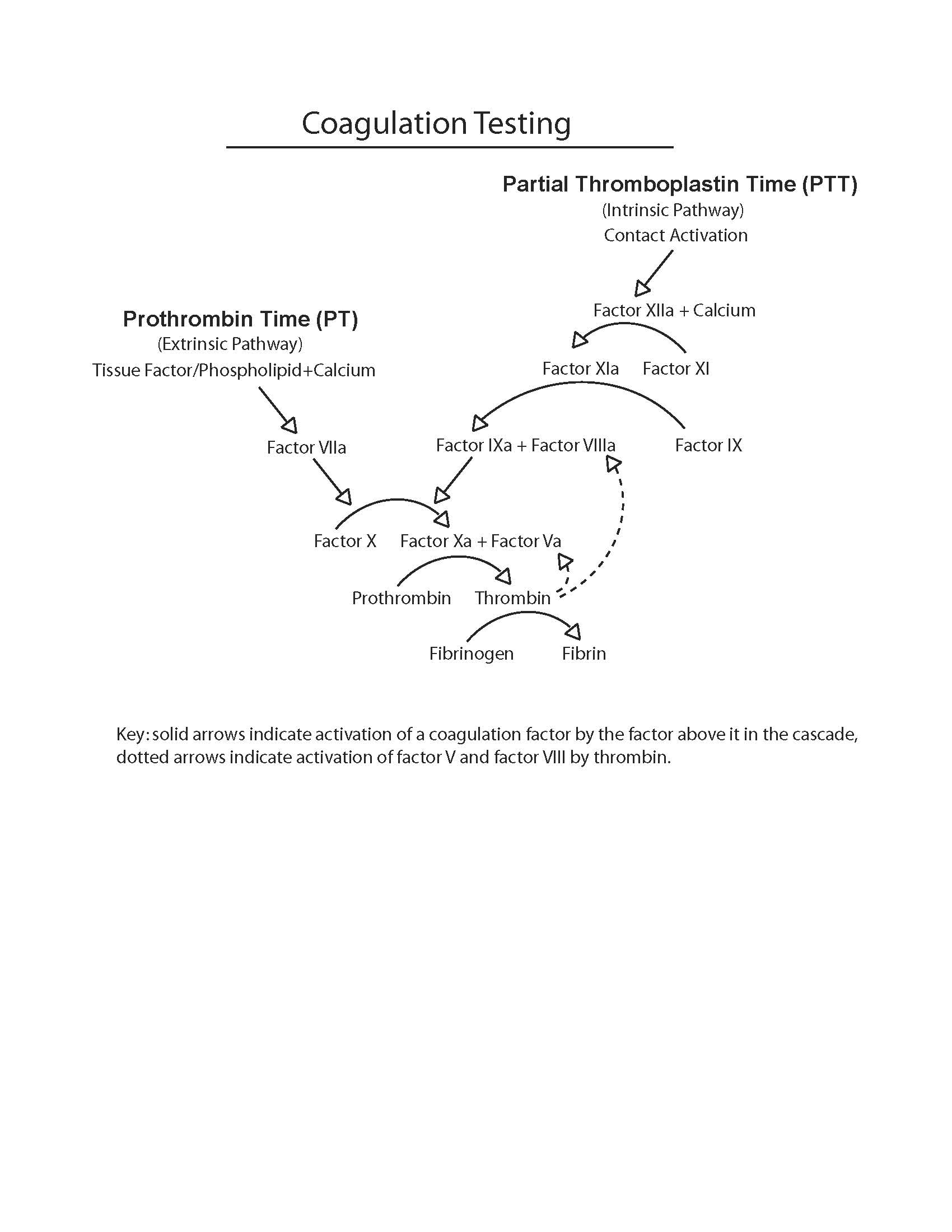 Diagram of the coagulation testing cascade